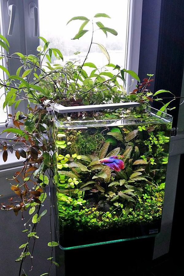 20 Best Betta Fish Aquarium Design