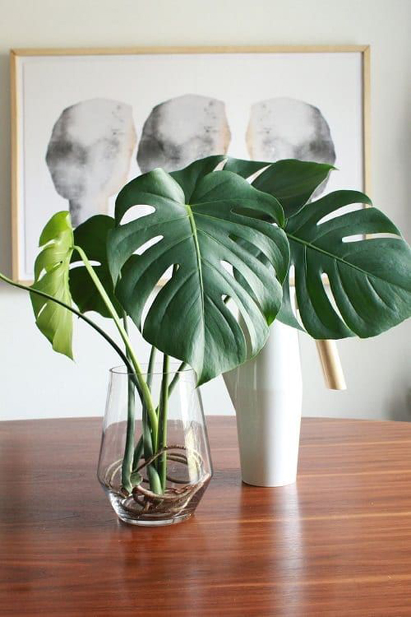 7 Best Indoor Houseplants That Grow In Water