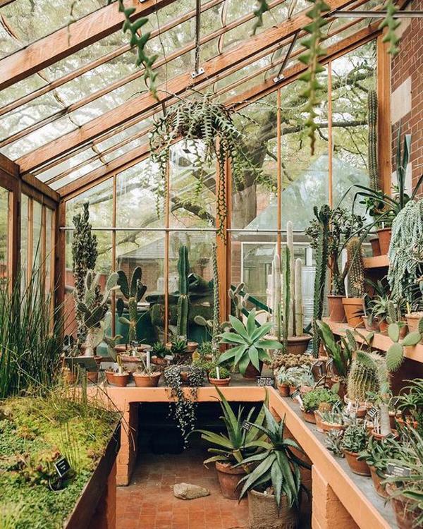 awesome-houseplant-greenhouse-ideas