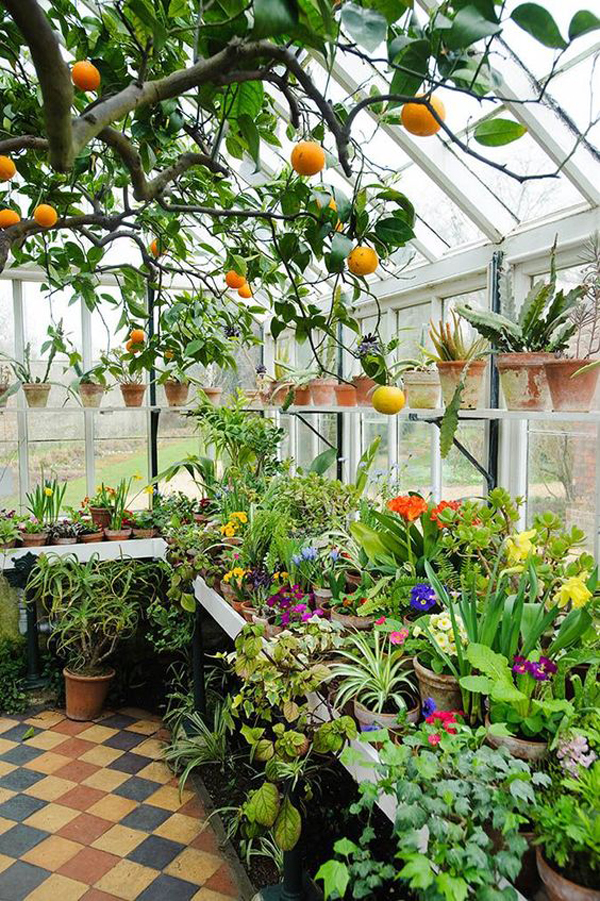 glass-greenhouse-and-conservatory-design