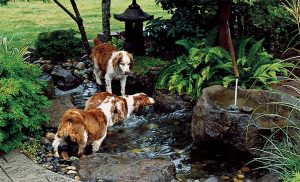 backyard-dog-pond-designs