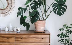 beautiful-monstera-display-cabinet