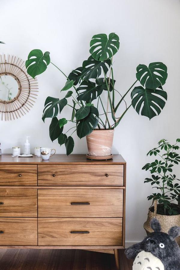 beautiful-monstera-display-cabinet