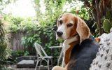 best-dog-retreat-ideas-in-backyard