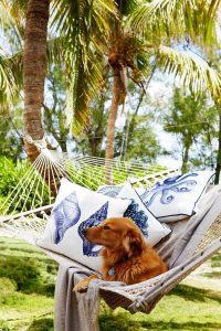 cozy-dog-hammock-ideas-for-outdoor