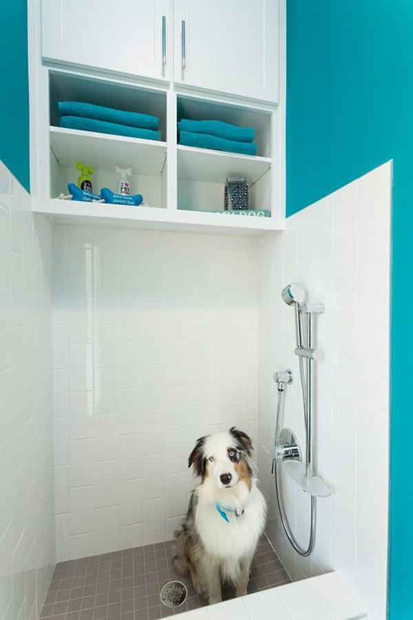 creative-dog-wash-station-with-blue-accent-wall