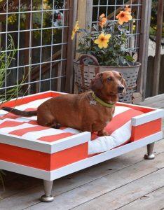 diy-modern-dog-bed-in-the-backyard