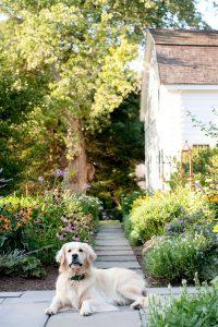 dog-friendly-garden-pathway-with-cozy-retreat