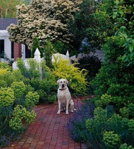 friendly-dog-garden-with-retreat-ideas