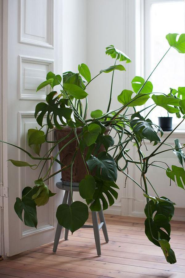 front-door-monster-plant-decor