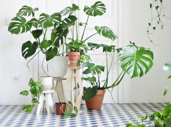 indoor-monstera-plant-decoration