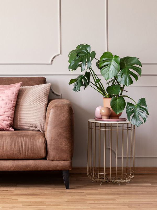 mid-century-monstera-stand-plant-for-indoor