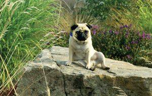 nature-dog-garden-retreats