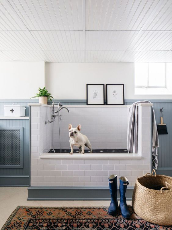 trendy-dog-wash-station-design