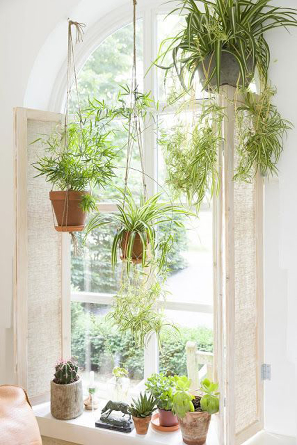 amazing-window-plant-and-hanging-garden