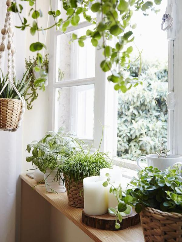 beautiful-window-garden-decoration