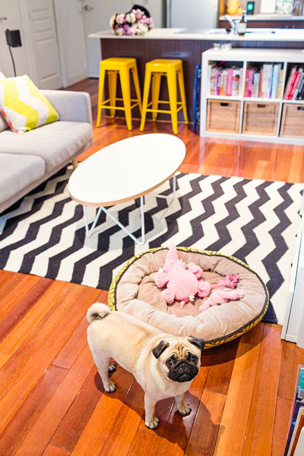cheerful-dog-friendly-living-rooms
