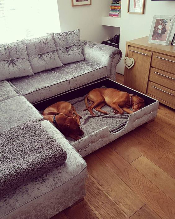 cool-dog-beds-in-living-sofa