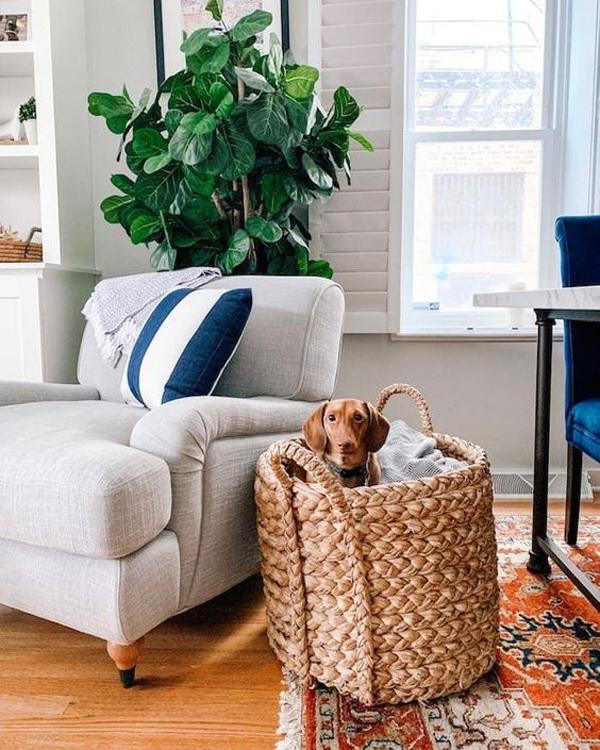 dog-friendly-basket-designs