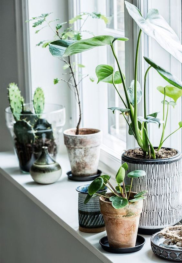 fresh-and-natural-window-plant-decor