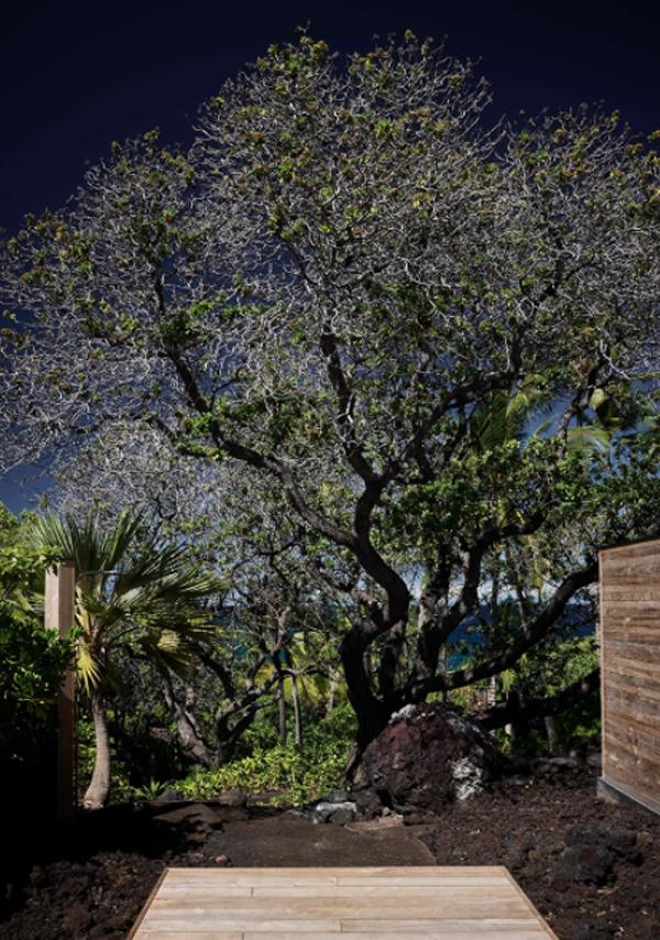 hale-huna-backyard-landscape
