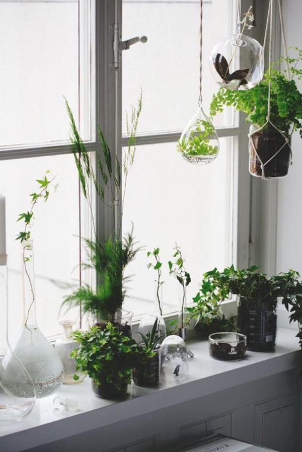 minimalist-window-plant-with-hanging-glass