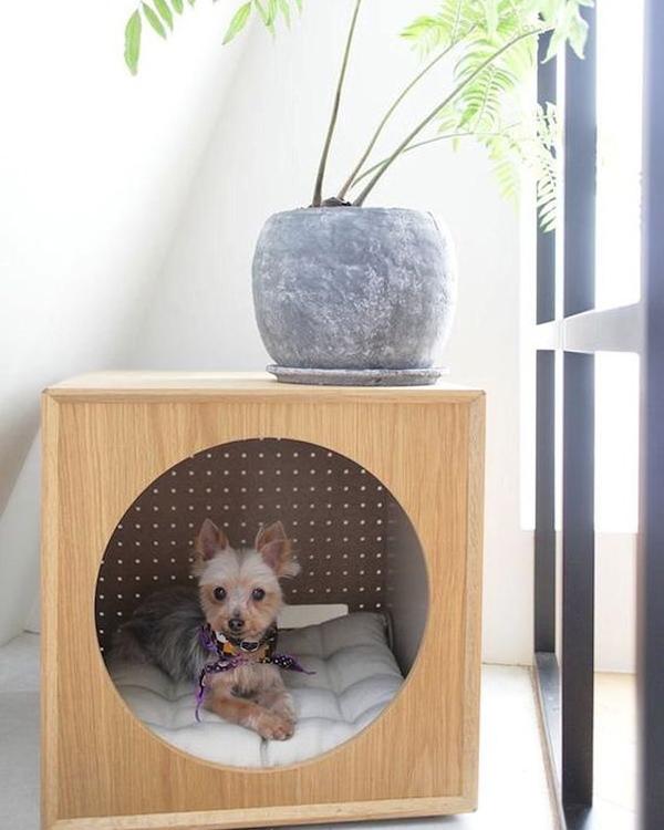 modern-dog-friendly-houses