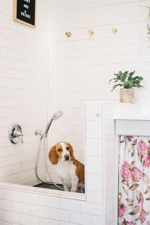 modern-dog-washing-station