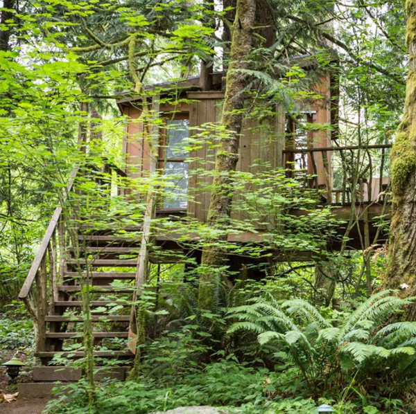 natural-diy-treehouses-in-the-forest