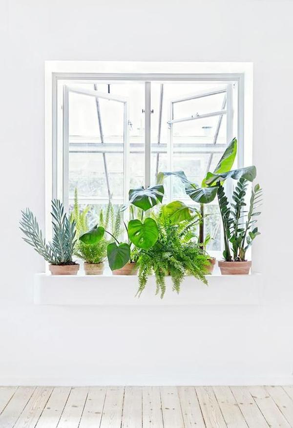 stylish-and-minimalist-indoor-window-plants
