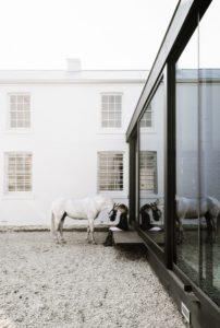 symmons-plains-horse-areas