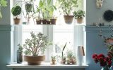 trendy-small-window-garden-for-indoor