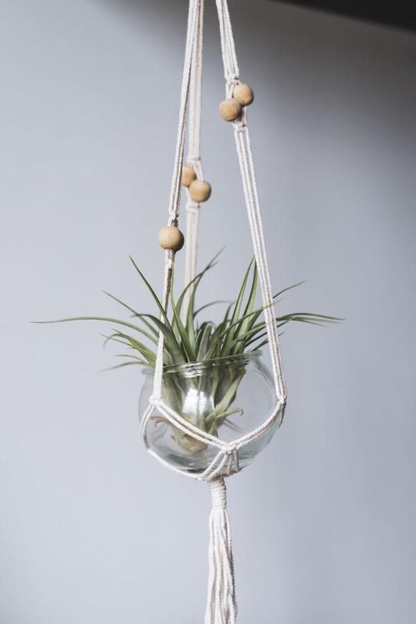 air-plant-for-bathroom