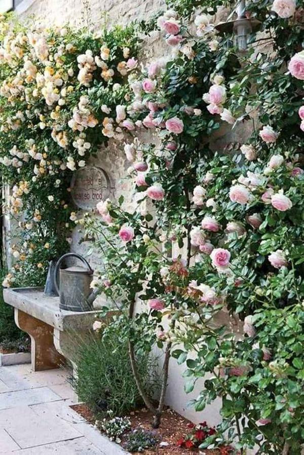 flower-cottage-garden-vines