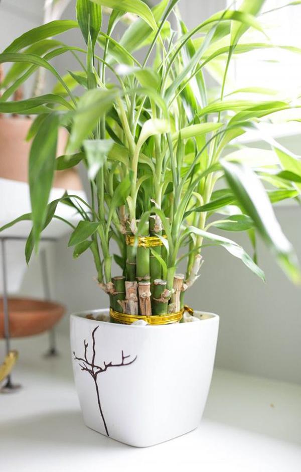 lucky-bamboo-bathroom-plant