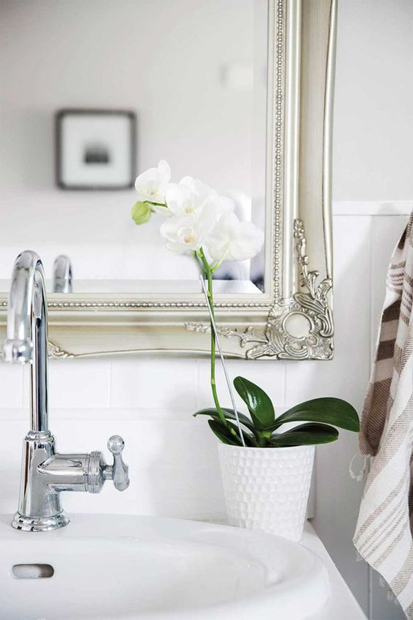 orchid-flower-plant-for-bathroom
