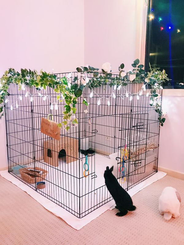 beautiful-diy-indoor-bunny-cage-with-string-lights