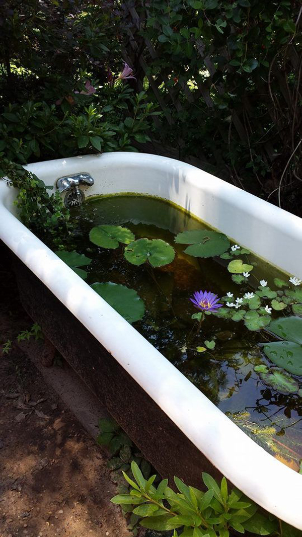 claw-bathtub-garden-pond-design