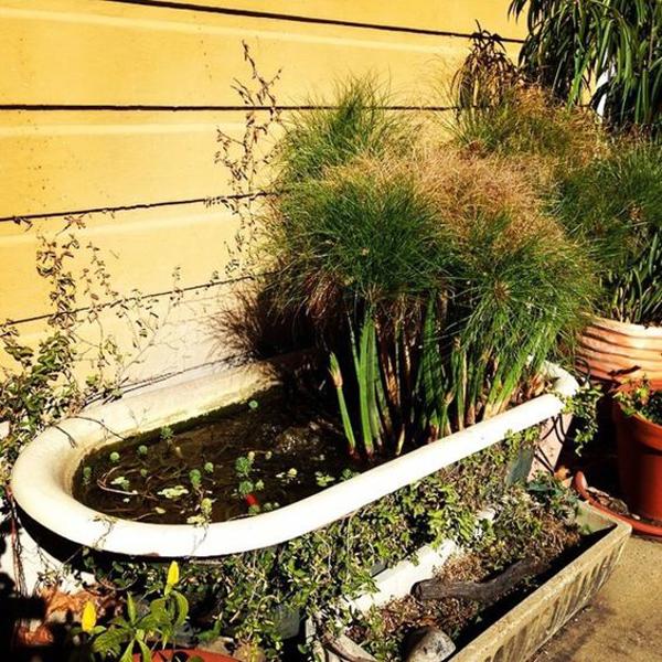 creative-diy-bathtub-pond-design