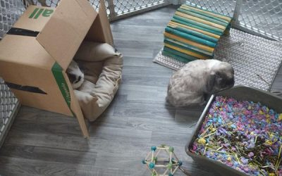 diy-rabbit-house-and-cage-decor
