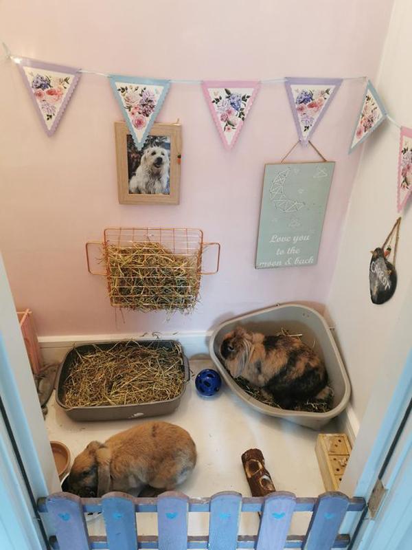 indoor-rabbit-house-ideas