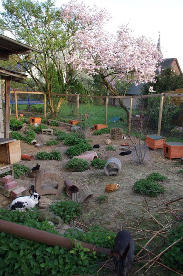 outdoor-bunny-playground-space