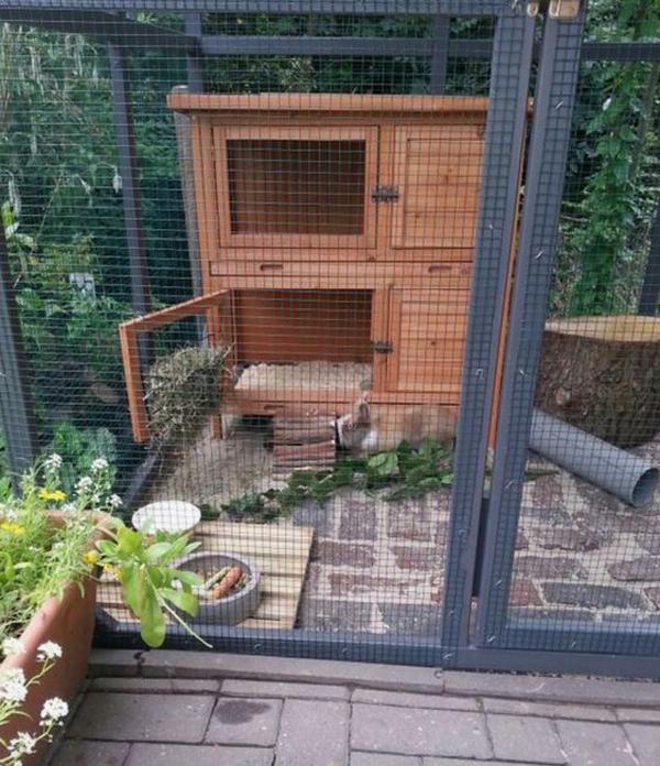outdoor-rabbit-housing-ideas
