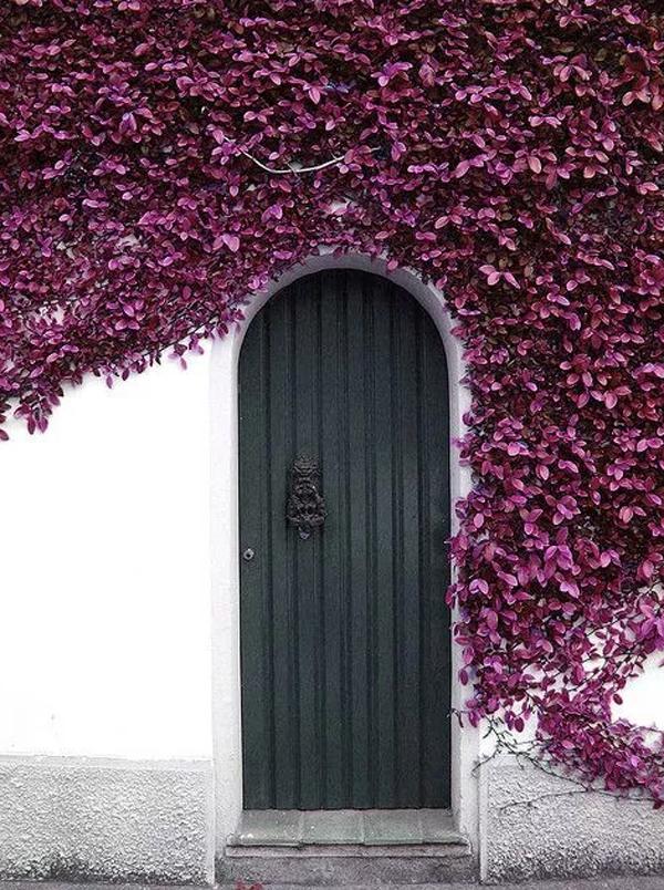 pretty-grey-front-door-with-purple-vines