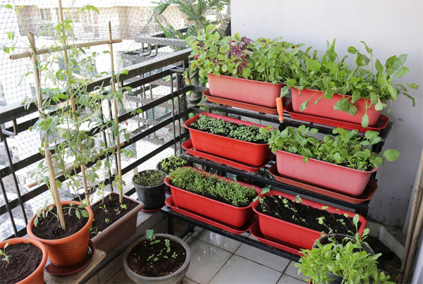 balcony-raised-bed-garden-with-splash-of-red
