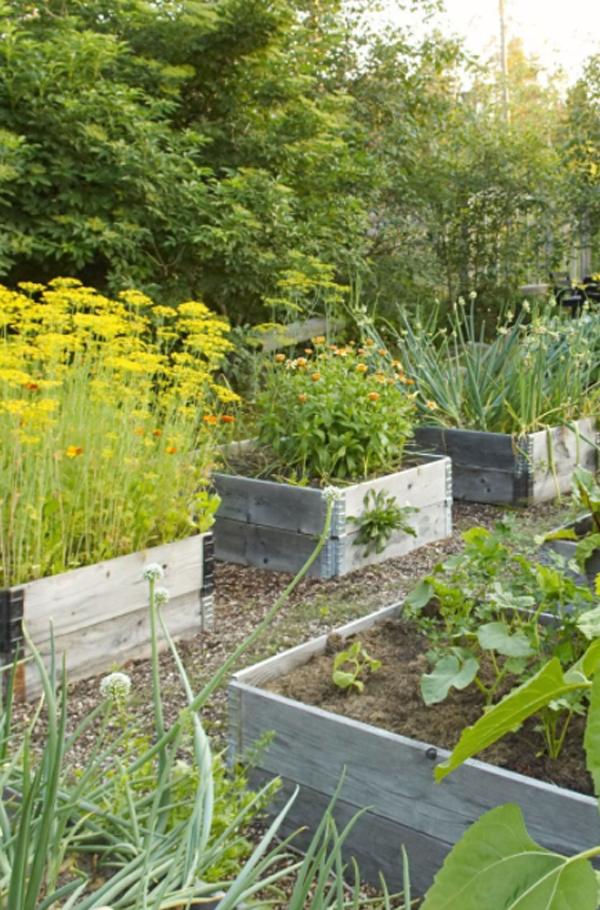 beauty-raised-bed-garden-layout