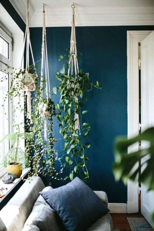 indoor-hanging-plant-ideas-with-blue-accent-walls