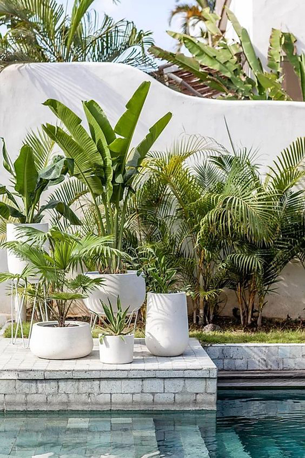 modern-poolside-landscaping-ideas-with-tropical-plants