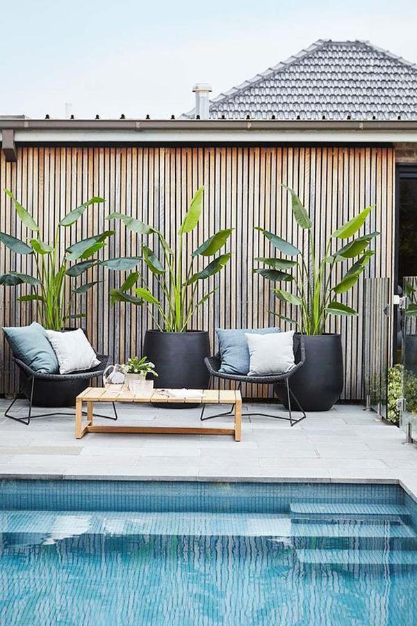 modern-poolside-tropical-plant-decor