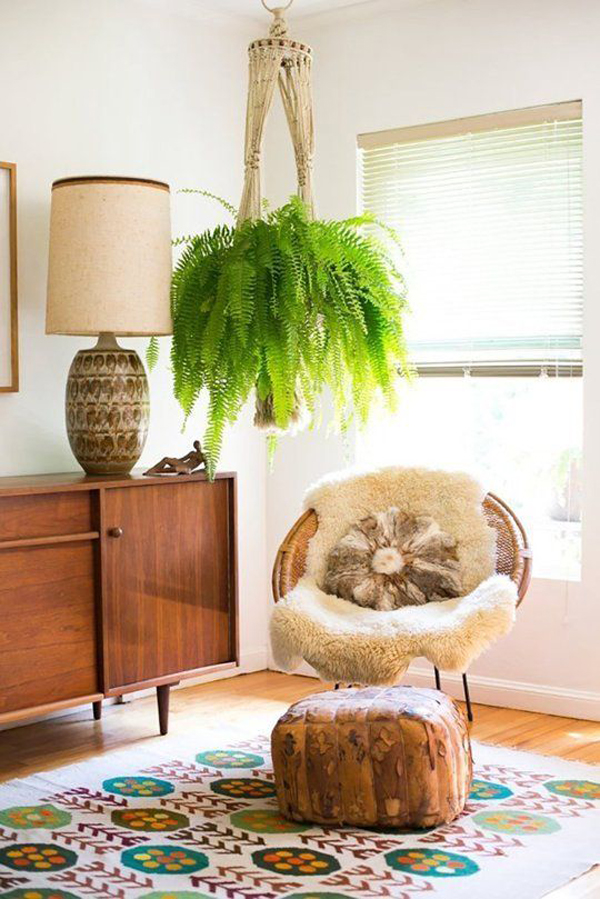 oversized-hanging-fern-houseplants